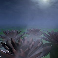 Waterlilies in Moonlight