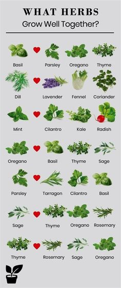 herbs grow well together? - companion planting herbs what herbs grow well together - Planting herbs together is a step toward a flowering garden!what herbs grow well together - Planting herbs together is a step toward a flowering garden! Planting Vegetables, Organic Vegetables, Growing Vegetables, Planting Plants, Garden Planting Layout, Planting Garlic, Easiest Vegetables To Grow, Pond Plants, Patio Plants