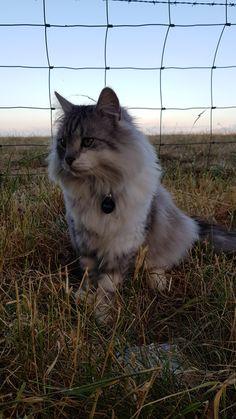 My fluffy kitty Archie