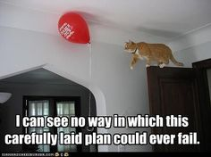 Cats can never fail