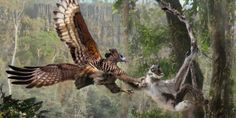 *prehistoric shudder*   Velizar Simeonovski    Extinct Madagascar: Picturing the Island's Past | The Field Museum