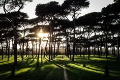 I am newly obsessed with this tree, the Maritime Pine, native to the Mediterranean. This photo is of Villa Pamphili