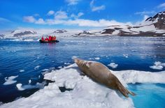Tourists watch a Weddell Seal along the coast of Antarctica
