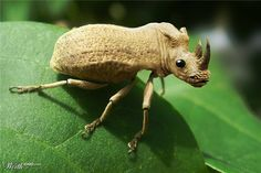 Rhino Insect - Worth1000 Contests