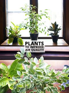 indoor plants that improve air quality #info #tips