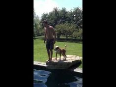 Kevin Bacon & His Dog Do Awesome Pool Trick in Adorable Home Video (VIDEO)