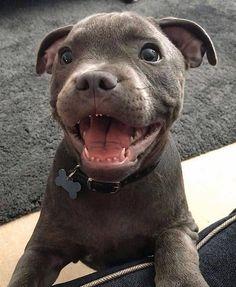 Capuche sweatshirt Hoodie pit bull race éleveurs chiens support CHIOT DOG