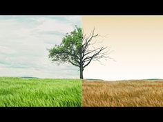 """In this Advance Photoshop Tutorial we will learn to create a two phase of Nature """"life & Death"""" using a tree image and dead tree. Photo Manipulation Tutorial, Tree Images, Life And Death, Photoshop Tutorial, Country Roads, Nature, Youtube, Painting, Naturaleza"""