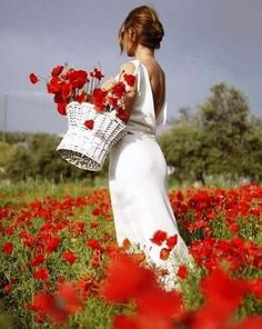 picking a basket of red poppies - Ana Rosa Cora Carolina Frases, Red Poppies, Red Roses, Red Cottage, Shades Of Red, Belle Photo, Flower Power, Wild Flowers, Beautiful Flowers