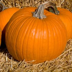 How do you welcome fall at your home? Do you pull out the hay bales, carve up the pumpkins, welcome the howling wind and wait as the leaves fall to the gro