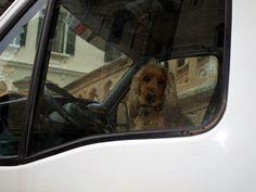 ***Nein, Herr Polizist, ich hab wirklich nichts getrunken....ganz ehrlich *** Image, Police Officer, Reflex Camera, Animales