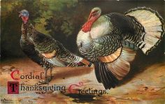 Alfred Schonian~German Artist~Detailed Pair of Thanksgiving Turkey~Emboss~IAPC