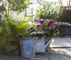 Att besöka Sanda Cottage, eller Veronica och Stefans trädgård, är som att kliva in i en egen värld. En värld där lust och iver att skapa ett eget paradis på jorden är det bränsle som driver dem att…