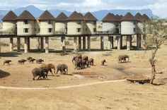 Kenya, Sarova Salt Lick Game Lodge