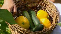 Nu e usor sa fii ecologist! Oras, Romania, Stuffed Peppers, Vegetables, Life, Food, Stuffed Pepper, Essen, Vegetable Recipes