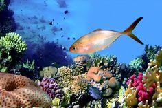 fotografías-del-fondo-marino-peces-de-colores-arrecifes-y-corales-en-los-océanos