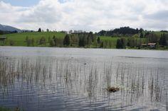 Beim Spaziergang das Brot nicht vergessen, Enten und Schwäne haben immer Hunger :) - Soier See, Bad Bayersoien, Ammergauer Alpen