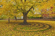Fall Labyrinth