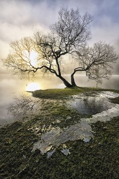 """""""Ullswater Tree"""" by Jason Connolly. """"Shot this back in Dec. 2009 down by the lakeside at Glenridding, Ullswater early morning and it was very misty. The sun was shining brightly through the low cloud and then I saw this tree with the iced up water around it... had to be done""""."""