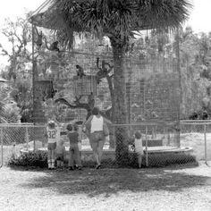 Monkey cage in Sanford's zoo - Sanford. 1979