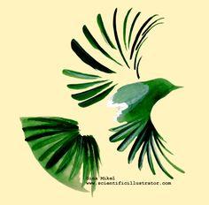 Bird Drawings Sketches | Bird Sketch, Pen and Ink