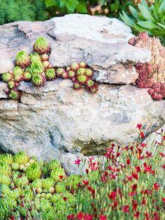 Créez Un Espace De Verdure Dans Votre Jardin De Rocaille