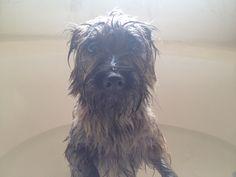 Bath time is evil.