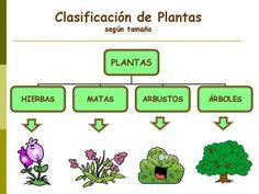 Clases de plantas - Clases de plantas según su tamaño Note Image, Palmiers, Homeschool, Learning, Nature, Plants, Ideas Para, Gardens, Vegetable Garden