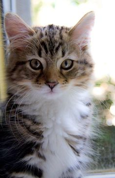 What a cute cat and look ar those whiskers
