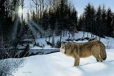 """Winter's Solitude-Wolf - """"Alone in the cold - strong, silent and bold; 'Winter's Solitude' depicts the strength of the season and the oneness in the wild."""" Original acrylic painting by Anthony J. Padgett."""