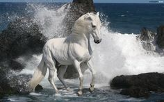 horse.. the ocean waves