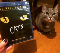 After seeing @catsbroadway this week I ordered the filmed stage performance from the '90s! The dancing was AMAZING. If the current cast made another one of these I'd totally buy it. #cats #cat #catsbroadway #catsofinstagram #catstagram #catslover #catsagram #catlover #kitty #fb