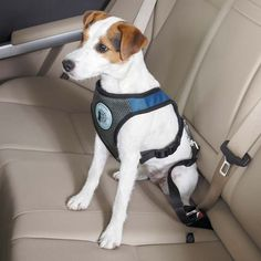 Dog is Good Car Dog Harness - Blue - The Dog is Good Car Dog Harness adds style and support to any regular and auto outing! Comfortable paddedDog is Good Car Dog Harness - Blue - The Dog is Good Car Dog Harness adds style and support to any regular and au Padded Dog Harness, Seat Belt Harness, Dog Car Seat Belt, Dog Car Seats, Dog Belt, Cheap Infant Car Seats, Medium Sized Dogs, Pet Travel, Service Dogs