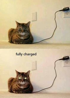 Your cat is fully charged. Please unplug it so others may use the outlet.