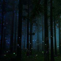 Firefly Forest, England    photo via betty