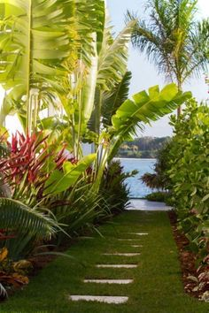 Walkway through tropical garden - use as stepping stones into pool area? not so linear though....