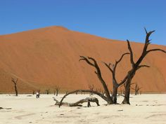 Kalahari Desert, Namibia...
