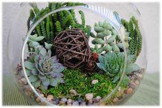 XLarge Globe Succulent Terrarium Kit Woodsy by SucculentsAndMore1