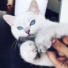 Adorable Kitty  #animal#cat#kitty#boo#morning#bouquet#roses#white#luxuryliving #gold #roses #tourbillon #rolex #rolexaholics #rolexwatch  #wristwatch #adidas #thebillionroses #ipadpro#hublot #hublotwatches #cartier #billionladies #billionaire #luxury #luxurylifestyle #luxurylife #expensivetaste #diamonds #fashionkilla#cat#kitty by luxurousy