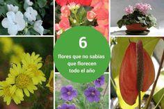 plantas que florecen todo el año post1