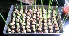Growing vegetables and fruits in the home garden is rewarding, but many people are put off by the backbreaking work involved at the start of the growing seas.Stop buying garlic at the store. Here's how to grow garlic right at homeStop buying garlic Growing Herbs, Growing Vegetables, Regrow Vegetables, Gardening Vegetables, Growing Garlic From Cloves, Veggies, Growing Tomatoes, Permaculture, Planter Ail