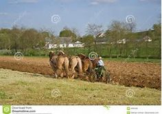 Image result for Amish Plowing with Horses