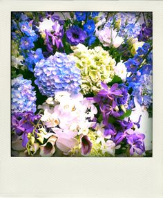 Blue and purple flowers.
