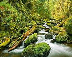 Ruisseau vercors ambiance jungle by rikoo Lynn Canyon, Canyon Park, Pergola, Parks Canada, Photo Mural, Les Cascades, Columbia River Gorge, Deep Forest, Forest River