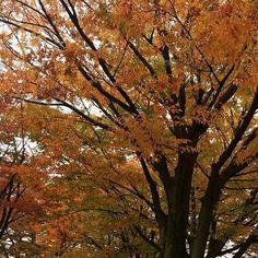 2016/11/14 13:16:05 kei_fukamizu 少しづつ紅く色付いてきた....🍁 なぜか紅葉は小さい頃から好きで大人になっても変わらず その気持ちは一緒🐻🎶 今年こそは行きたいところがある! 大好きな友達と😘 紅葉🍁って本当に綺麗だょなぁ 🍁 . . . #紅葉 #東京 #秋 #love #happy #instagood #good #幸せ #holiday #休日 #美容 #癒し  #美容