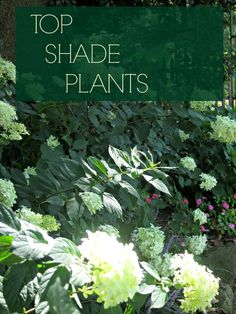 Discover Top Shade Perennials - www.landscape-des… The best shade plants for the garden…easy to care for too! Lots of color is - Best Plants For Shade, Shade Garden Plants, Plants For Shady Areas, Best Flowers For Shade, Shrubs For Shade, Flowering Plants, Outdoor Plants, Outdoor Gardens, Outdoor Shade