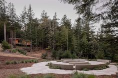Fletcher Studio embeds cemetery alternative into Californian forest Bartlett School Of Architecture, Architecture Student, Landscape Architecture, Forest Conservation, Mendocino Coast, Concrete Building, Tree Canopy, Forest Park, Cemetery