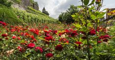Rapperswil – Picturesque Town of Roses by Lake Zurich Switzerland Trip, Lake Zurich, Fragrant Roses, Southern Charm, Window Shopping, Invite, Medieval, Castle, Anniversary
