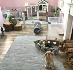 My Dream Bunny Room Bunny Room Bunny Cages Animal Room - Bunny Room Ideas Bunny Cages, Rabbit Cages, House Rabbit, Rabbit Toys, Pet Rabbit, Indoor Rabbit House, Diy Bunny Cage, Rabbit Hutch Indoor, Indoor Rabbit Cage