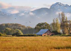 Eberle Family Farm in Sequim, Wa Sequim Washington, Washington Usa, Port Angeles, Senior Trip, Olympic Peninsula, The Ranch, Go Outside, Pacific Northwest, Vacation Spots